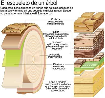 La madera 2 eso for Tipos de arboles y su significado